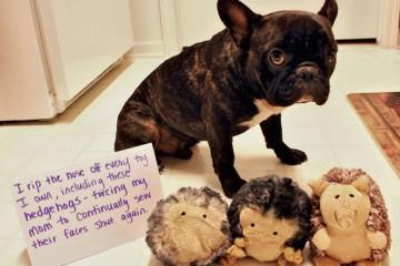 1 funniest animal shaming