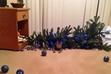 1 pets ruin christmas