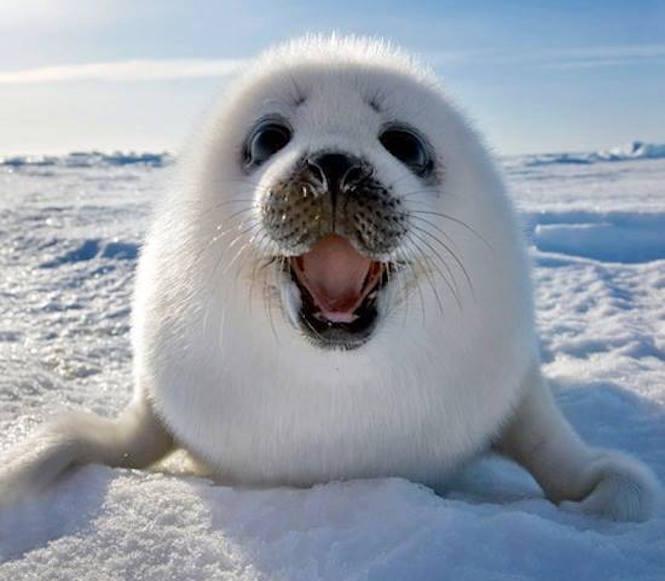1 smiling animals